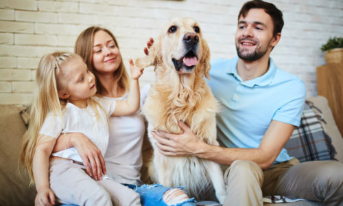 Vine-vera-best-pets-for-your-family-dogs