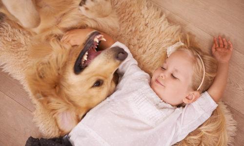 Dogs-quiz-health-quiz-500806053