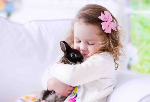 Little Girl Playing With A Real Pet Rabbit